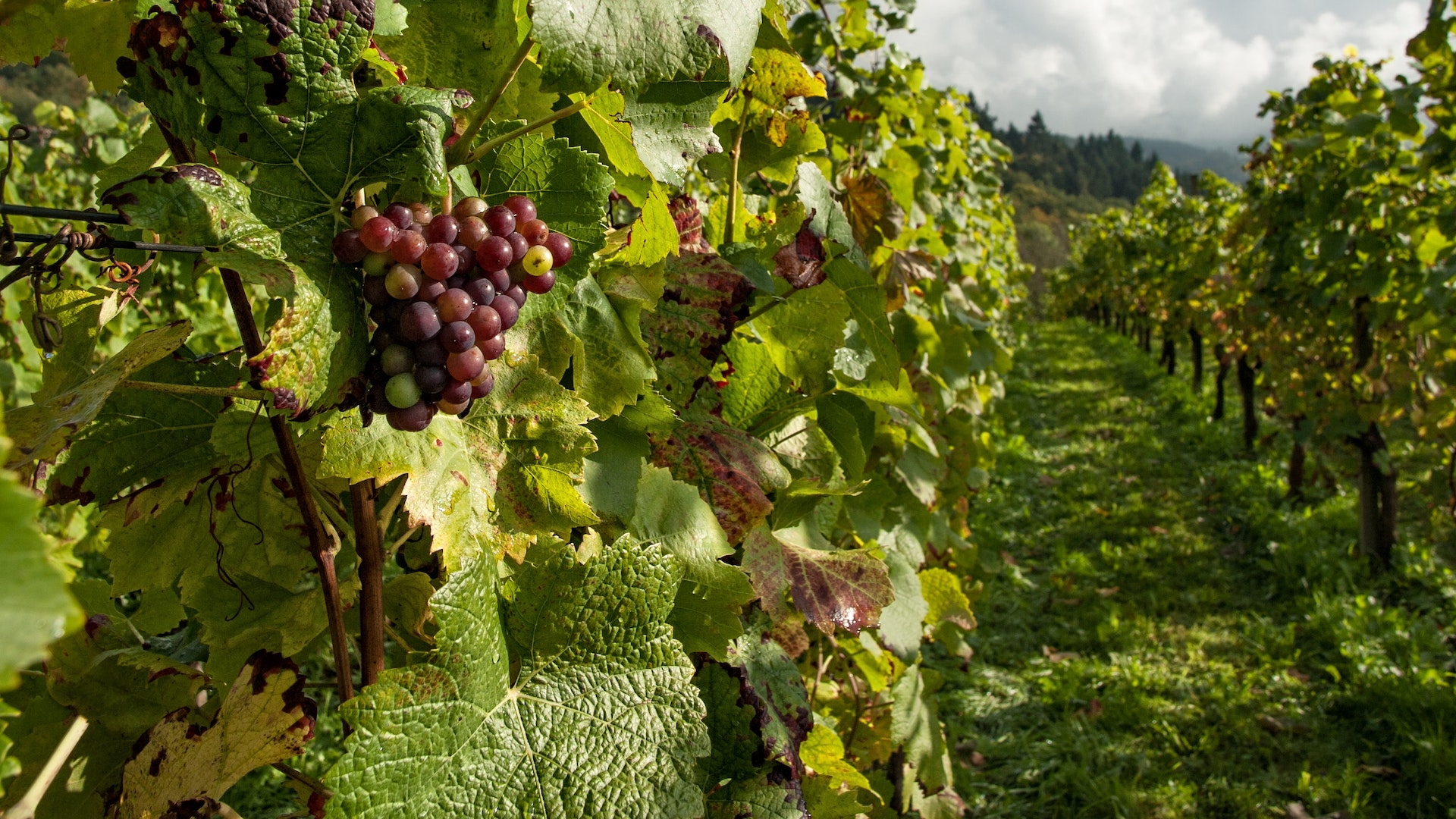 Bodegas de Argentina inicia un foro permanente de sustentabilidad vitivinícola para la industria