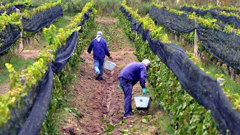 Informe de CAME: economías regionales en alerta por falta de mano de obra