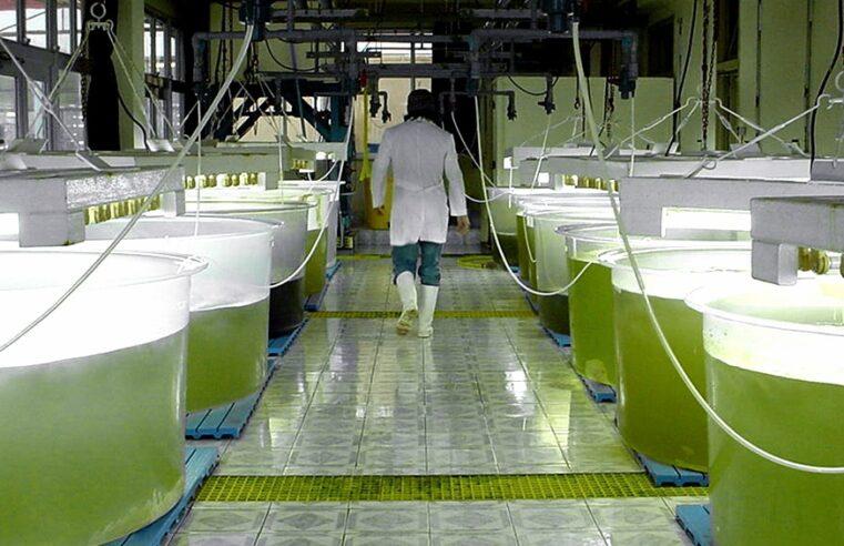 Entidades empresarias de la región centro del país instan a prorrogar la ley de biocombustibles