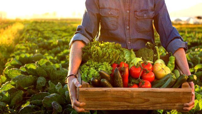 Producción de alimentos orgánicos: crecieron en superficie y establecimientos