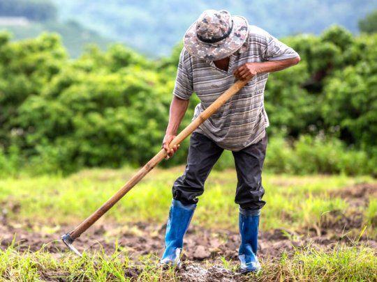 Tras el pedido de CAME, el presidente anunció la compatibilidad de planes sociales con trabajo rural registrado