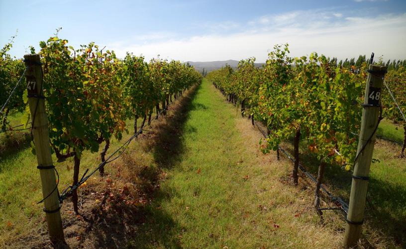 Destacan la producción de vinos de diversas cepas en la Provincia